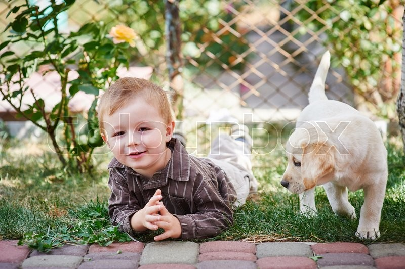 Stock image of 'little boy playing with a white Labrador puppy.'