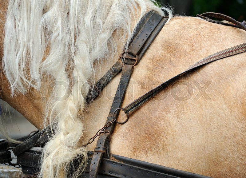 Stock image of 'The harness on a horse wearing brown'