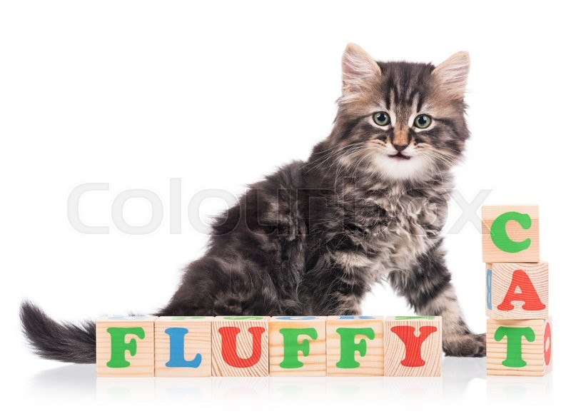 Stock image of 'Cute siberian kitten with playing cubes isolated over white background'