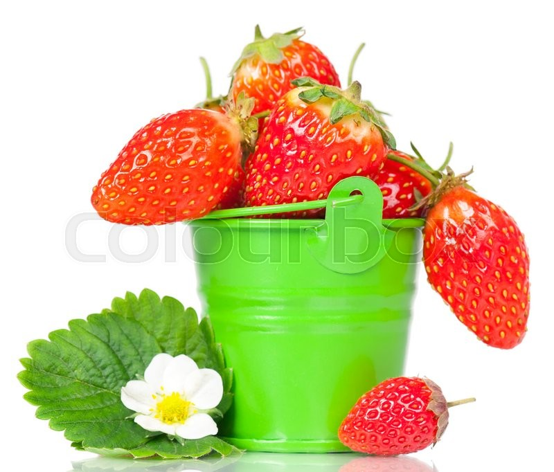Stock image of 'Ripe sweet strawberries with leaf and bloom in the bucket isolated on a white background'