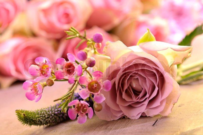 rosa rosen in der sonne stockfoto colourbox. Black Bedroom Furniture Sets. Home Design Ideas