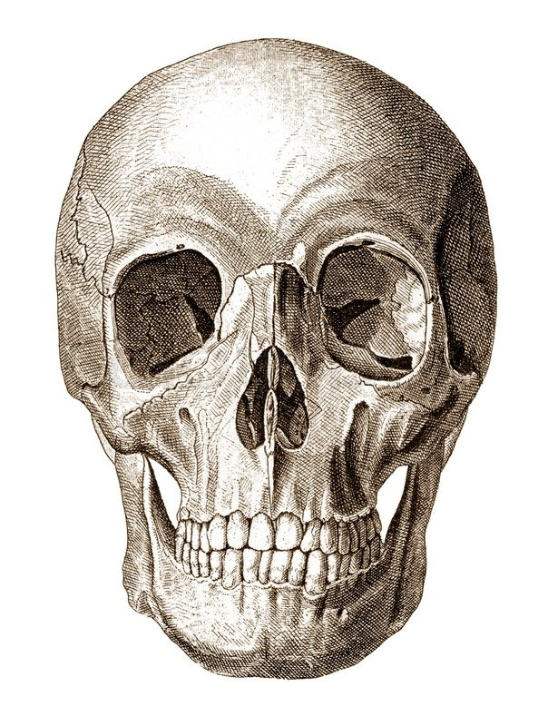 Old Engraving Illustration Of Human Skull Front View Stock Photo