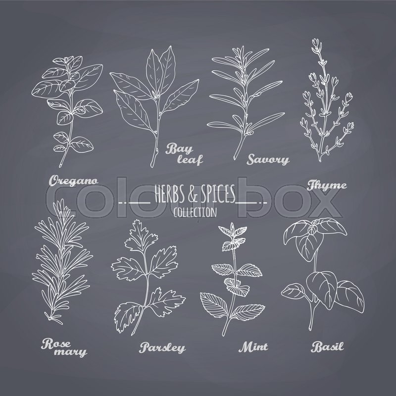 Set Of Hand Drawn Spicy Herbs On Chalkboard Background Chalk Style Condiments For Your Design Vector Illustration