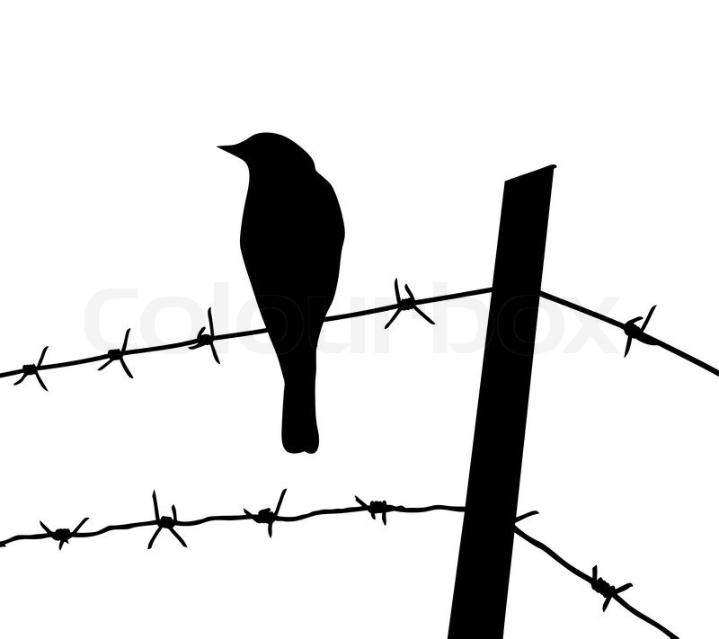Vector silhouette of the bird on barbed wire | Stock Vector | Colourbox