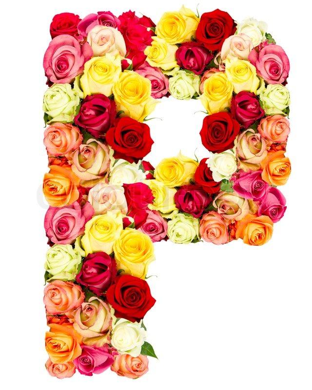 P Roses Flower Alphabet Isolated On White Stock Photo