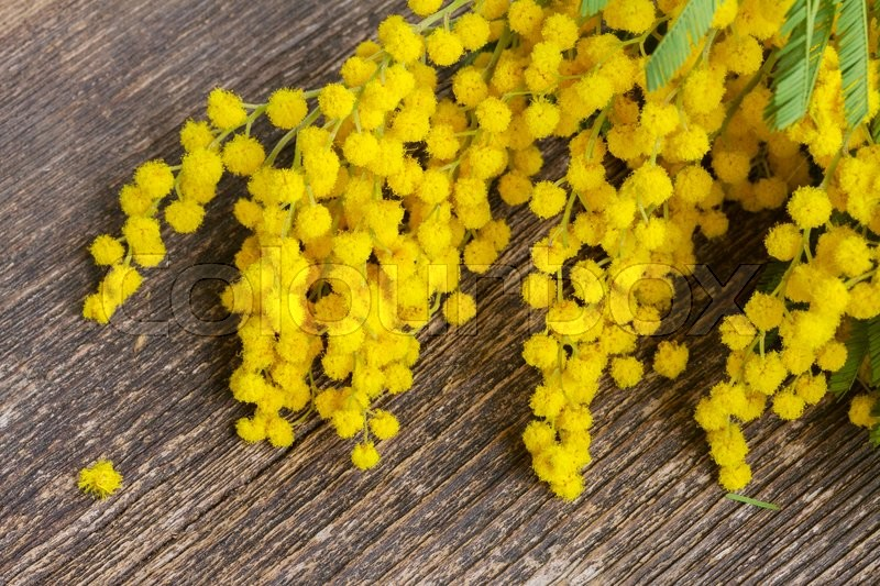 Yellow french mimosa flowers on wooden table stock photo colourbox mightylinksfo