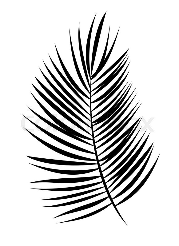 palm leaf vector background isolated illustration eps10 stock rh colourbox com palm vector free download palm vector free download