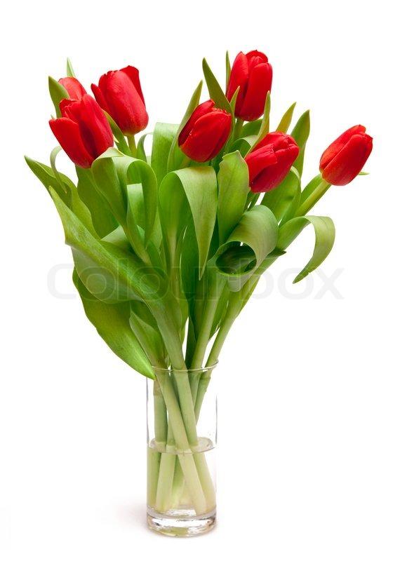 sch ne rote tulpen in der vase stockfoto colourbox. Black Bedroom Furniture Sets. Home Design Ideas