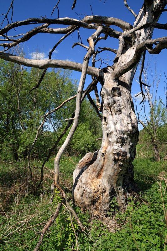 1763598-old-ugly-tree.jpg