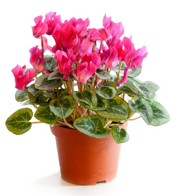 Ziemlich Blühende Pflanze Reproduktion Arbeitsblatt Fotos - Super ...