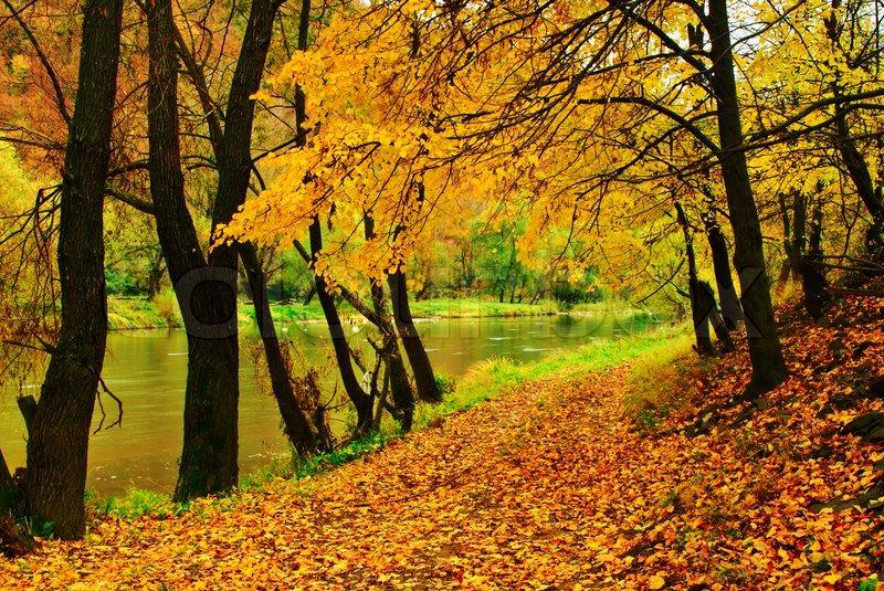 Af efterår park med floden løber nede i efterårsfarver skoven