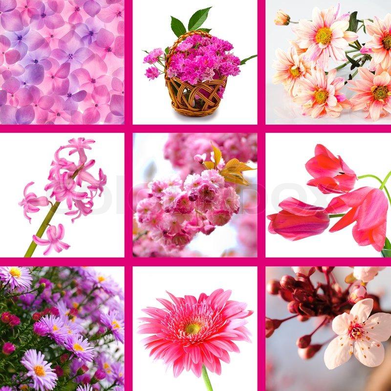 Pink Flowers - Southeastern Arizona Wildflowers and Plants
