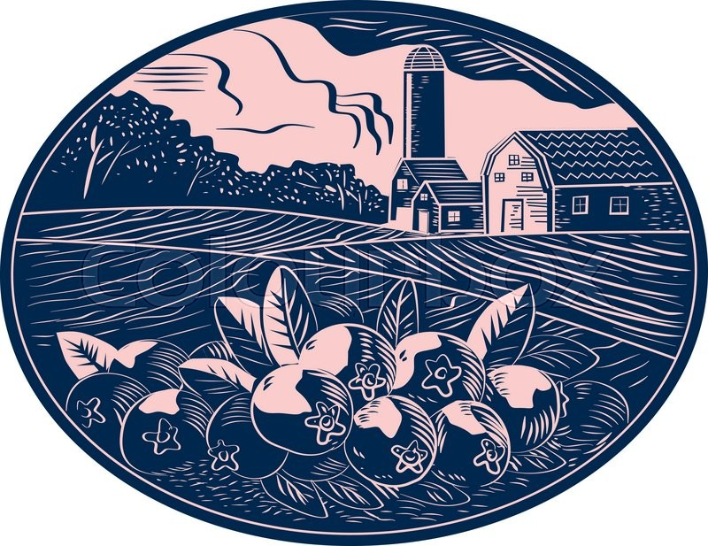 Illustration Of A Cranberry Fruit Farm With Farmhouse Barn And Silo In The Background Done Retro Woodcut Style