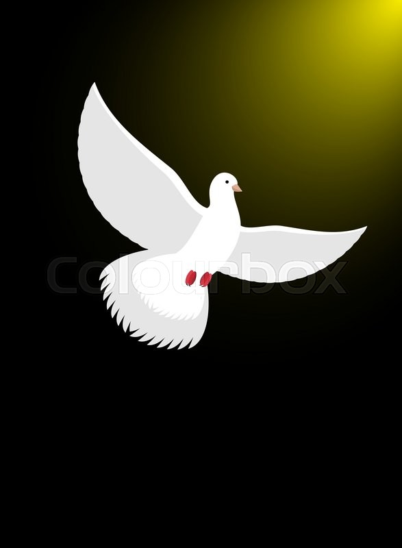 White Dove Flies In Dark On Divine Light Magical Glow And White