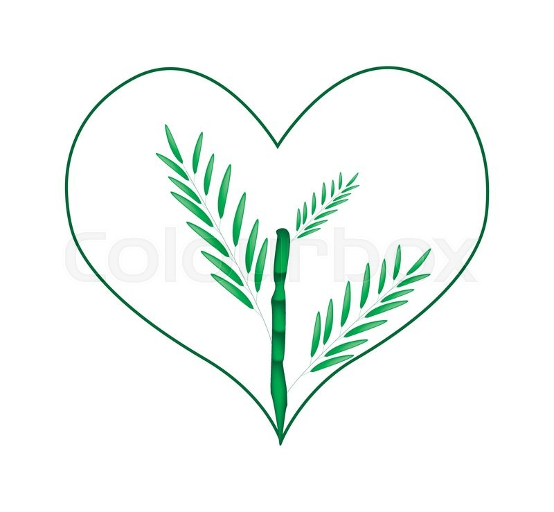 Love Concept, Illustration of Small Bamboo Tree in A Heart Shape ...