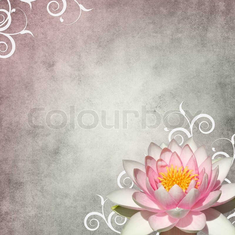 Pastel Background With White Lily And Stock Image Colourbox