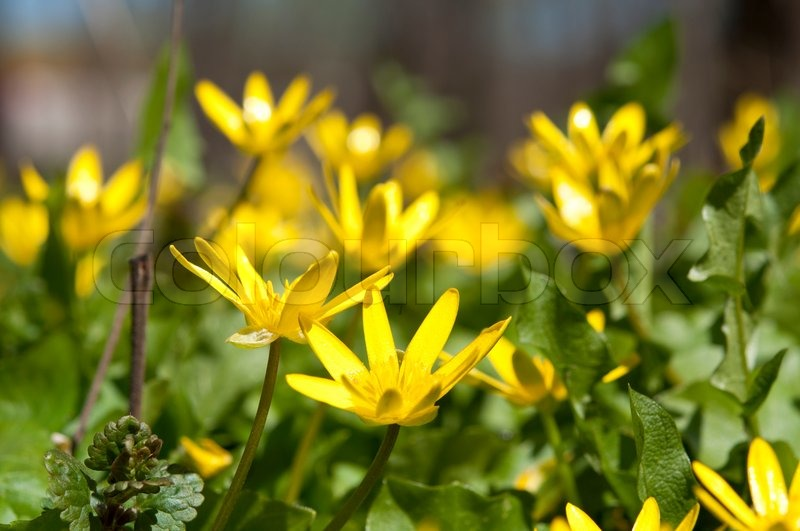 Gelbe Bluten Im Park Im Fruhling Stockfoto Colourbox