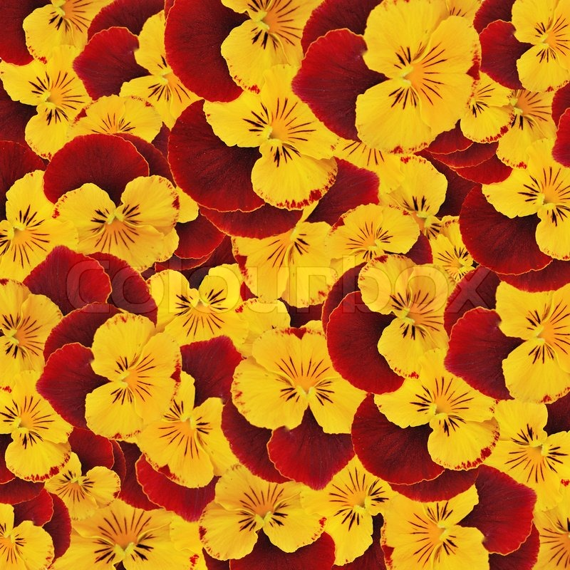 Background from red and yellow colors in bulk spring flowers background from red and yellow colors in bulk spring flowers stock photo colourbox mightylinksfo