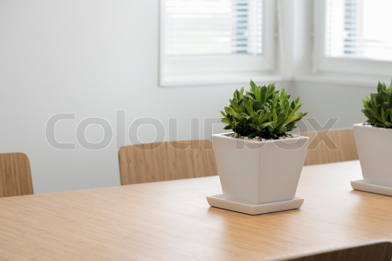 Modern Dining Room With A Plant On The Table Stock Photo