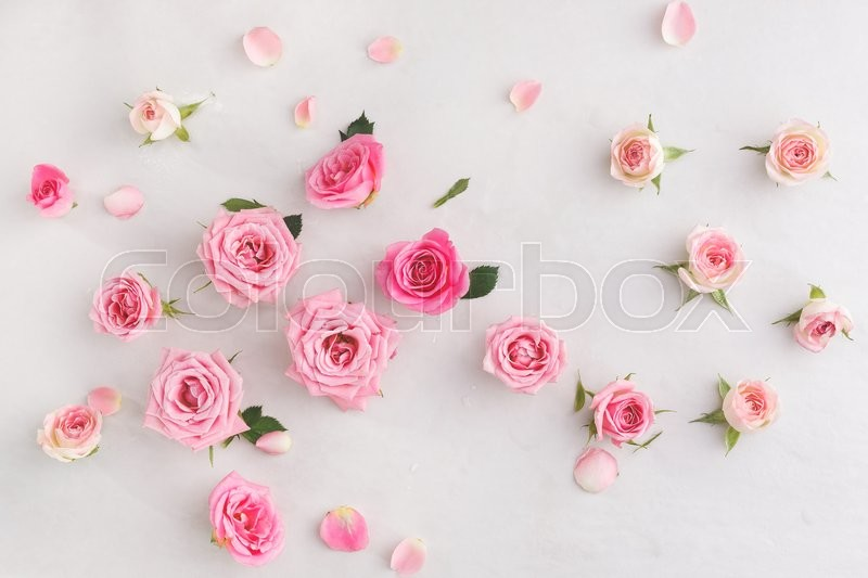 Assorted roses heads, stock photo