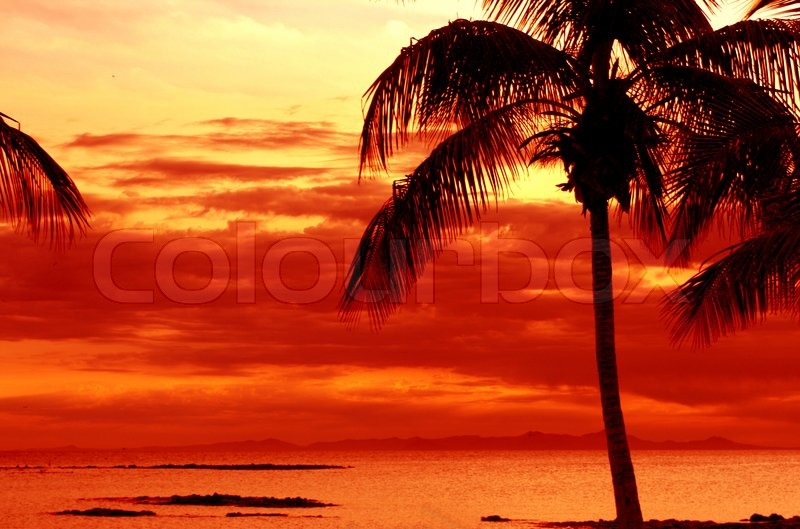 orange sonnenuntergang am tropischen insel mit palmen stockfoto colourbox. Black Bedroom Furniture Sets. Home Design Ideas