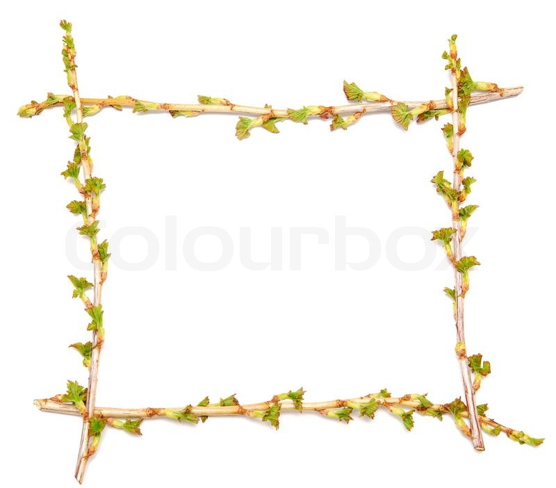 Spring twig frame isolated on white | Stock Photo | Colourbox