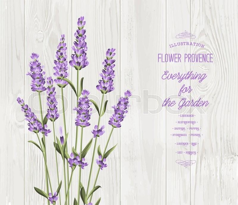 vintage lavender background wwwpixsharkcom images