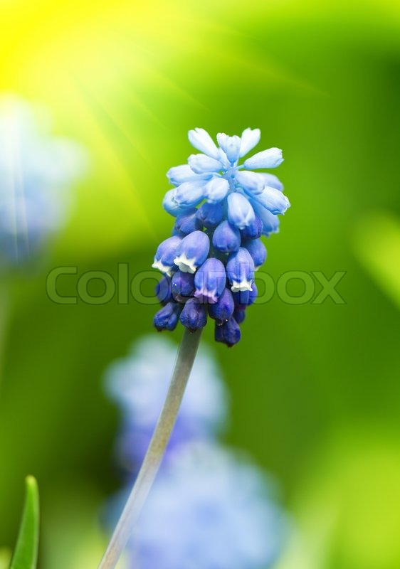 Stock image of 'background, spring, flower'