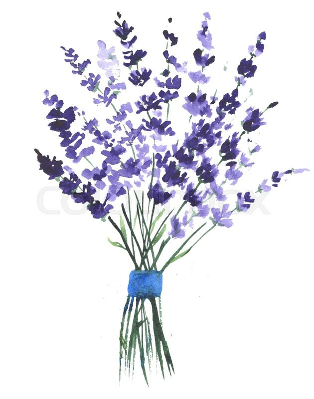 watercolor lavender clip art stock photo colourbox rh colourbox com lavender clipart lavender clipart black and white