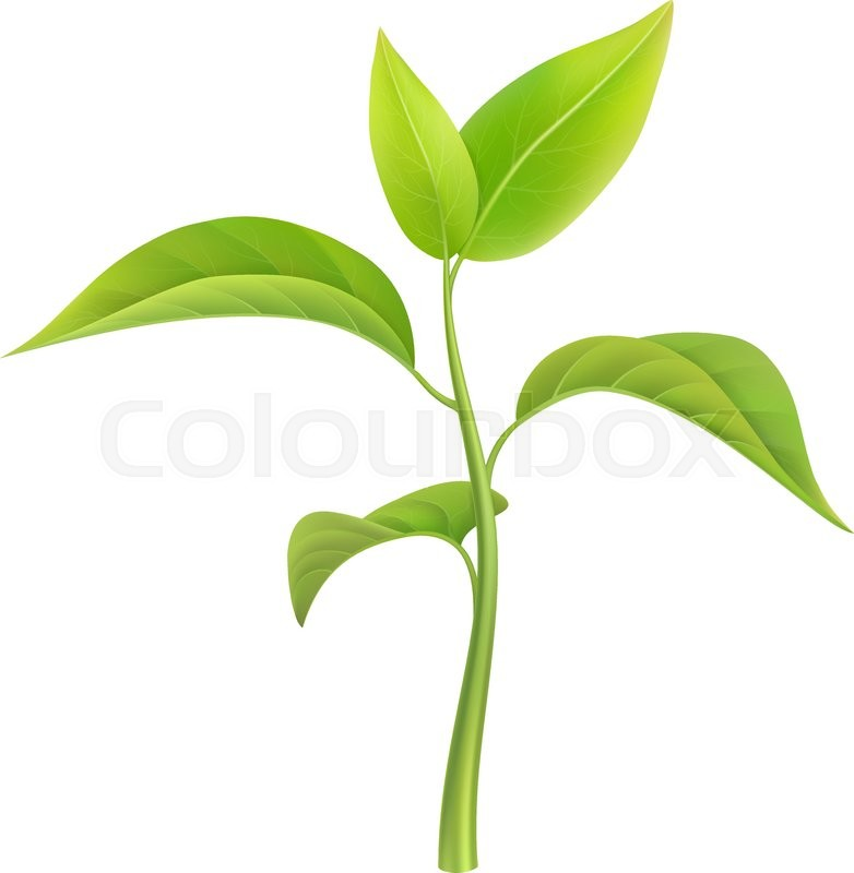 green sprout small branch young plant vector illustration rh colourbox com plant victor daniel plant victor daniel