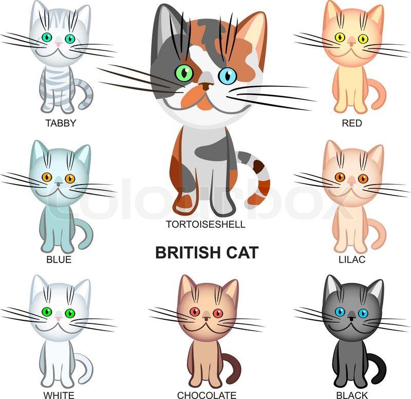 Stock vektor af british shorthair katte af forskellige farver sort