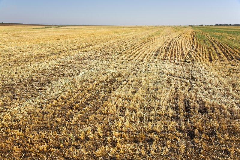 https://www.colourbox.com/preview/1786507-field-with-the-rests-of-crops-after-harvesting.jpg