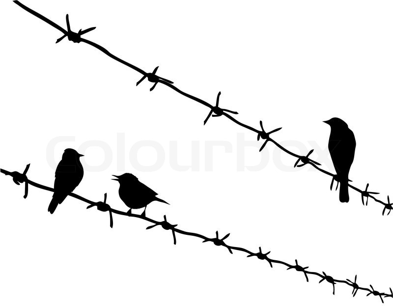 Vector silhouette three birds on barbed wire | Stock Vector | Colourbox