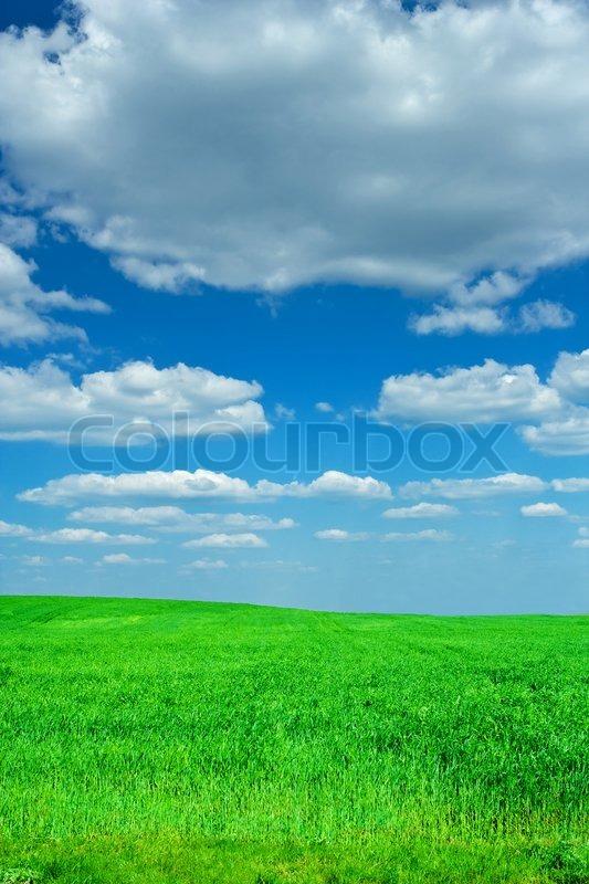 Beauty blue sky green field | Stock Photo | Colourbox