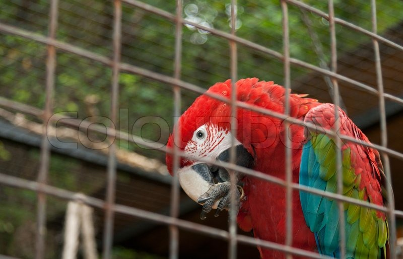 Big Varicoloured Parrot In Hutch In Zoo Of The Prague