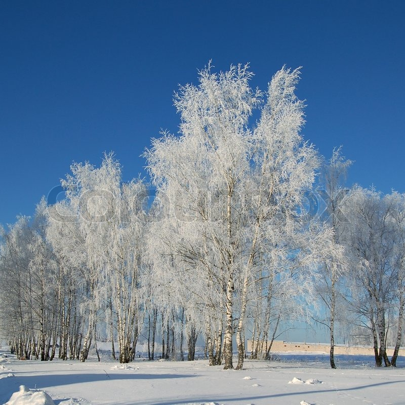 Wonderful winter day with trees covered with white frost, stock photo