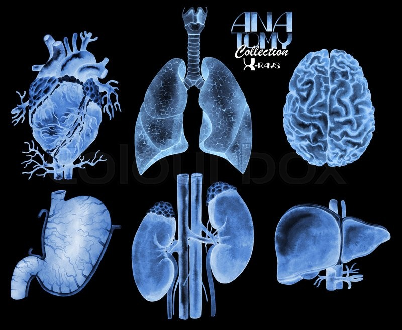 Watercolor anatomy collection - X-rays of organs. Heart, lungs ...