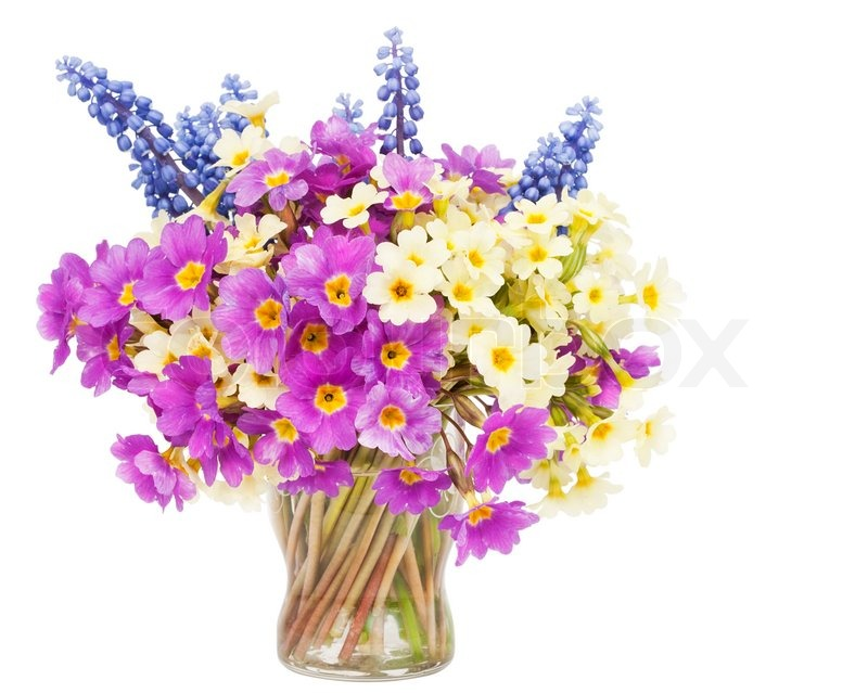 Sprigs Muscari and Primroses flowers bouquet in small glass isolated ...