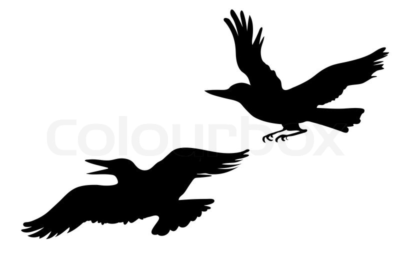 Divergent ravens