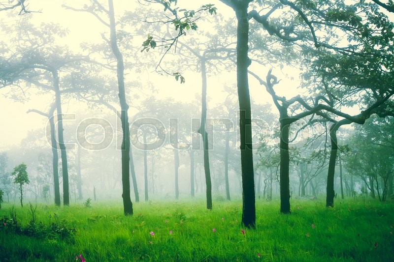 Soft Focus Of Misty Forest After Rain Stock Photo