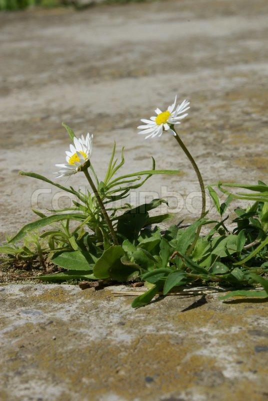 how to get rid of weeds between concrete