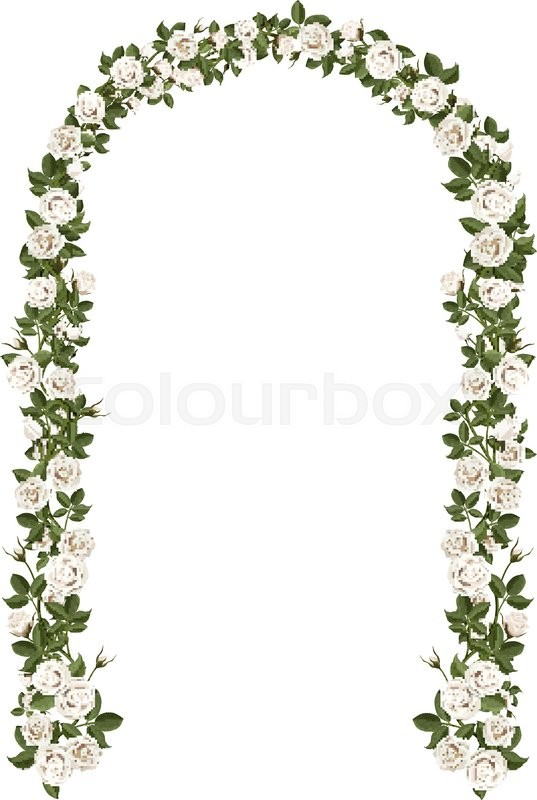Arch of white climbing roses floral design wedding decoration arch of white climbing roses floral design wedding decoration vector illustration detailed isolated on white background vector junglespirit Images