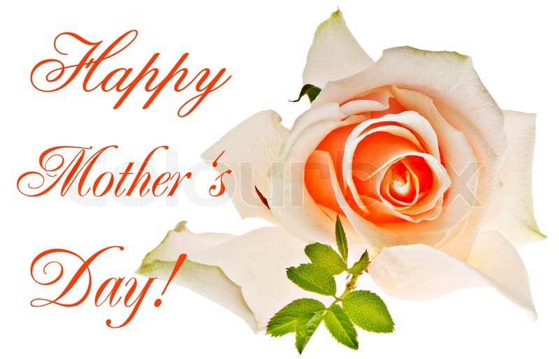 Happy Mothers Day Card Concept Single Rose Isolated On