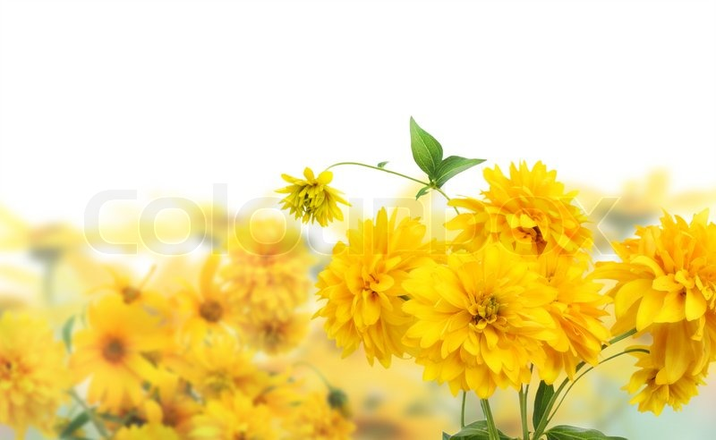Yellow golden flowers postcard collage background selective focus, stock photo