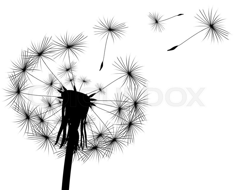 Silhouette With Flying Dandelion Stock Vector Colourbox
