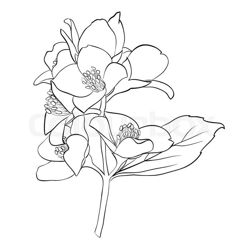 Beautiful monochrome black and white flower isolated on white beautiful monochrome black and white flower isolated on white background hand draw contour line and strokes greeting card and invitation of wedding ccuart Image collections