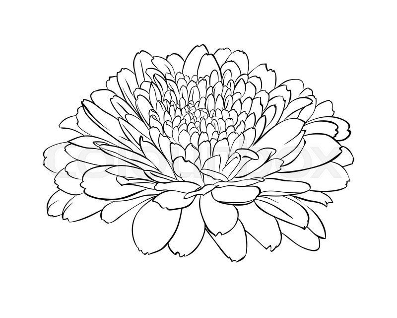 Contour Line Drawing Of A Flower : Beautiful monochrome black and white flower isolated on