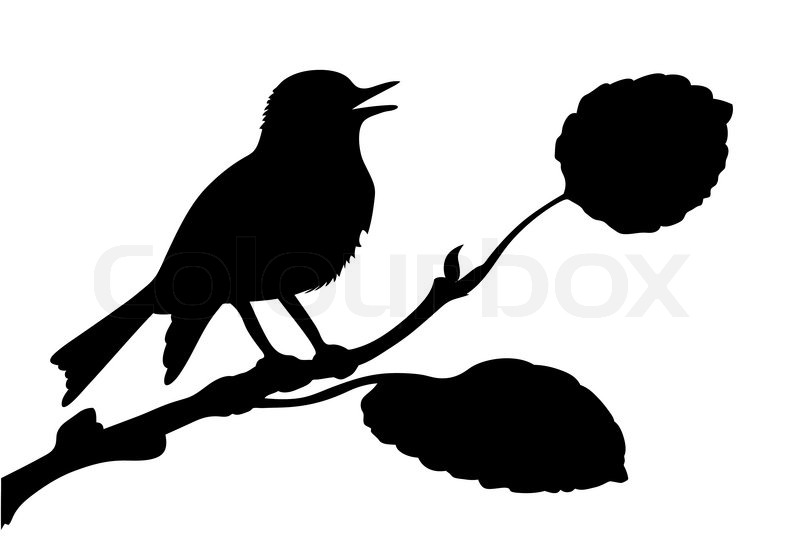 Vektor silhuet af fugl p gren stock vektor colourbox - Vogel vorlage ...