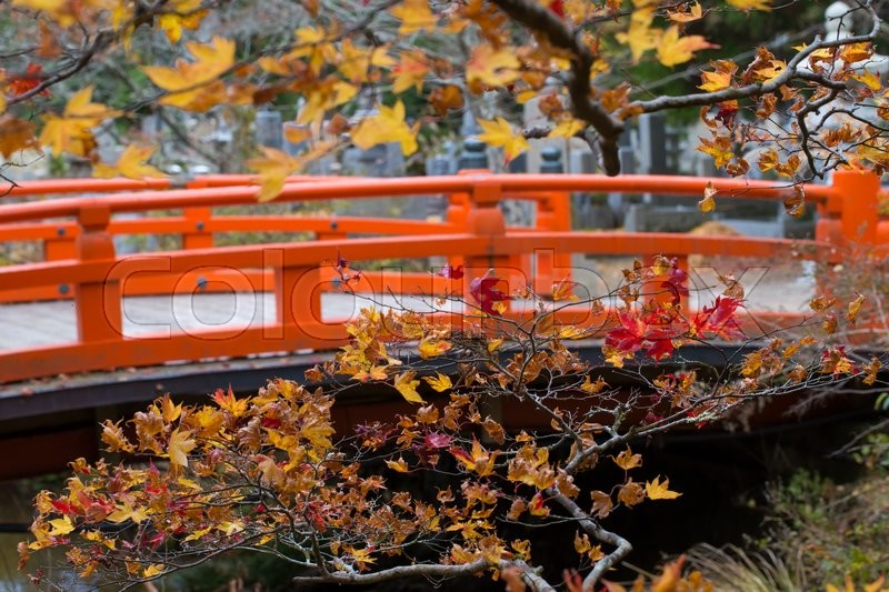 Japanese Bridge,yellow and red maple bush tree blossom in autumn with traditional style red bridge of Okunoin mausoleum, Koyasan, Japan, stock photo