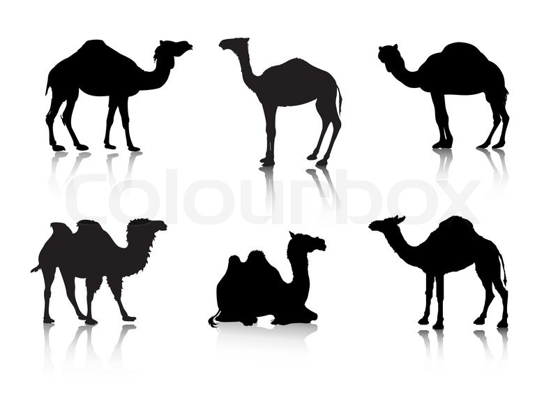 Vector Images Of A Camel From A Series Silhouettes